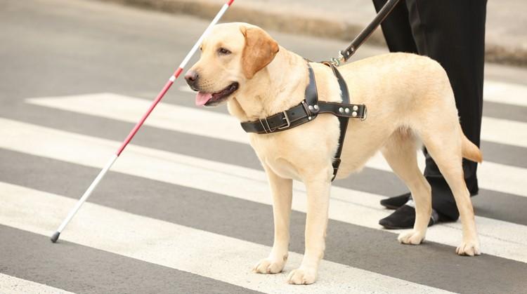 Nieuw implantaat kan blinden deels laten zien afbeelding nieuwsbericht