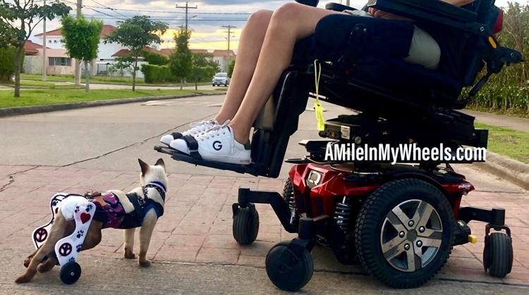 Vrouw en kat in rolstoel zijn echte maatjes afbeelding nieuwsbericht