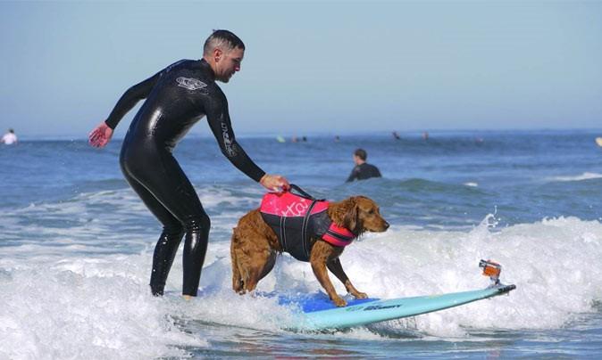 Deze lieve hulphond leert mensen met een beperking surfen afbeelding nieuwsbericht