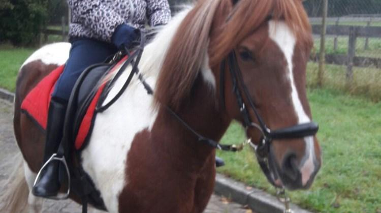 Vivian is slechthorend, slechtziend, ze heeft broze botten en zit in een rolstoel. En ze rijdt paard! afbeelding nieuwsbericht