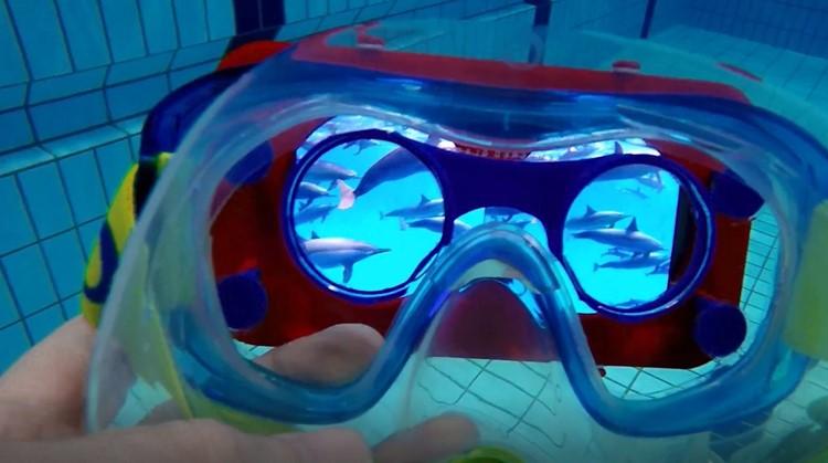 Zwemmen met dolfijnen in het zwembad afbeelding nieuwsbericht