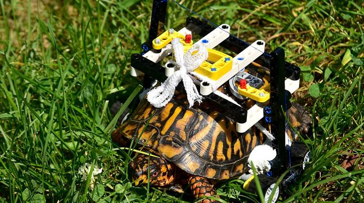 Deze schildpad herstelde met Lego rolstoel afbeelding nieuwsbericht