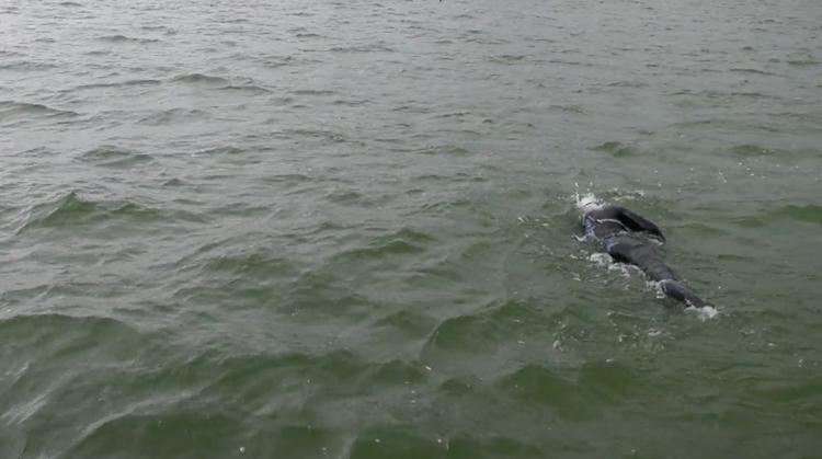 Geert Schipper zwemt IJsselmeer over afbeelding nieuwsbericht