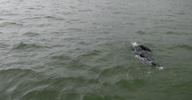 Afbeelding Geert Schipper zwemt IJsselmeer over