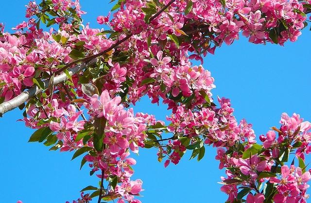 Deelnemen aan de Bloesemtoch op 22 april? Meld je aan voor 1 april afbeelding nieuwsbericht