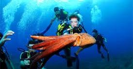Clinic: ontdek het leven onderwater! afbeelding nieuwsbericht