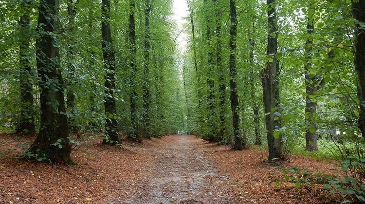 Bewegen in het Bos neemt je mee naar buiten! afbeelding nieuwsbericht