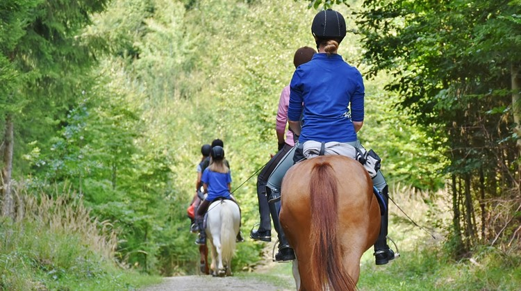 Sportcarrousel aangepast sporten Houten - Paardrijden afbeelding nieuwsbericht